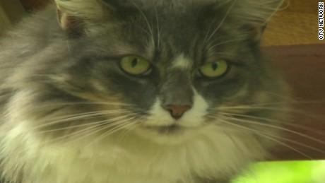 earl grey cat running for prime minister canada pkg_00010617.jpg