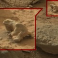 Mars Iguana