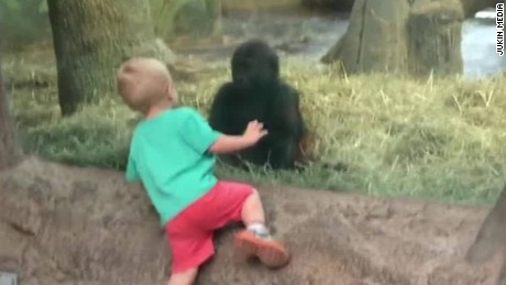 gorilla plays peekaboo kid newday _00000715