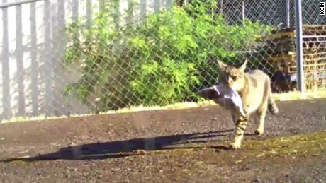 kleptokitty cat bandit oregon pkg_00003012