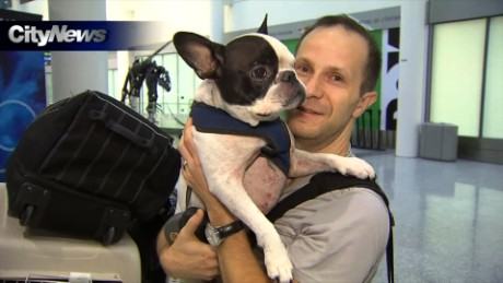 Pilot diverts airplane to save dog for Traveling on a plane with a dog