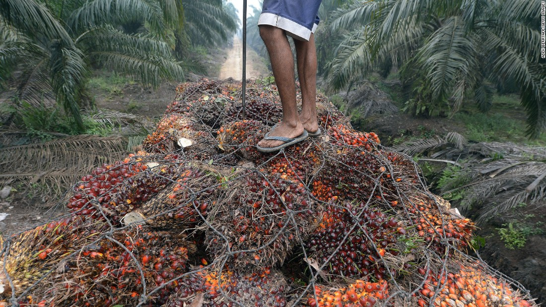 A worker stands on palm-oil seeds in the back of a truck at a plantation area in Pelalawan on September 16.