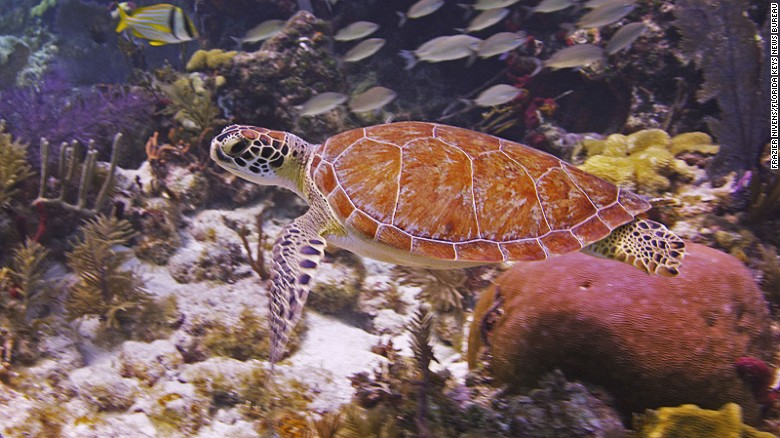 Key Largo's John Pennekamp Coral Reef State Park was the first undersea park in the United States.
