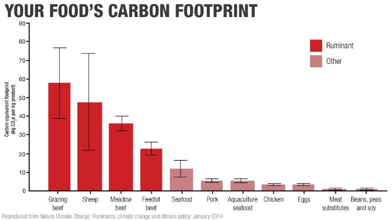 Carbon footprint of beef