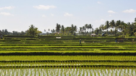 They may not be the staple attraction in Bali, but paddy fields are still one of the most calming experiences you can have under the sun.