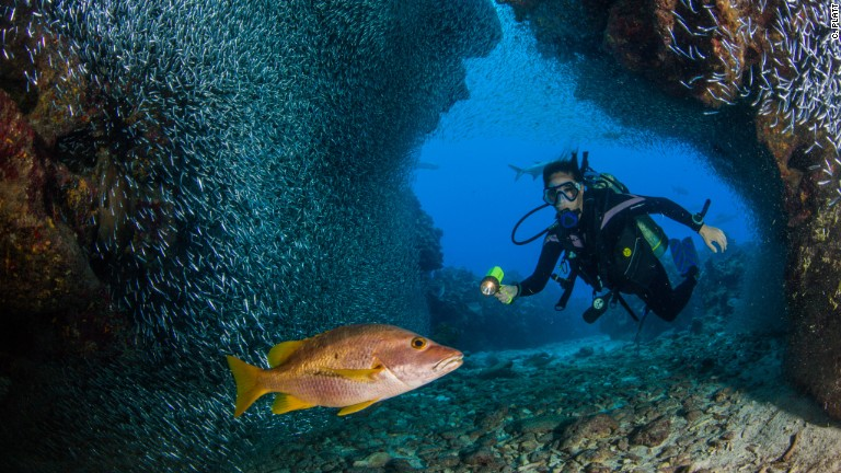 Grand Cayman's coral reefs must not be destroyed