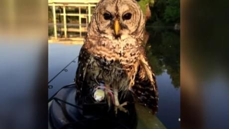 cnnee vo owl some catch _00001210
