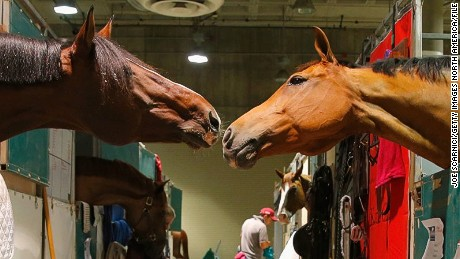 LOS ANGELES, CA - SEPTEMBER 25:  Horses are seen in the stables during the Longines Los Angeles Masters at Los Angeles Convention Center on September 25, 2014 in Los Angeles, California.  (Photo by Joe Scarnici/Getty Images for Masters Grand Slam Indoor)