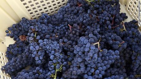 St emilion wine bittermann