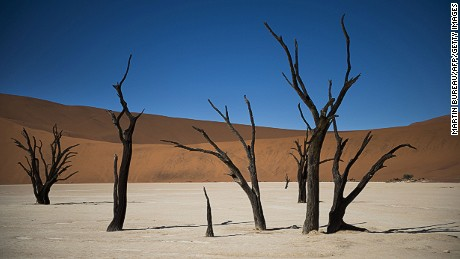 A picture taken on May 14, 2015 in the Namibia Naukluft National Park near Sesriem shows dead trees of Dead Vlei in the salt desert of Sosusvlei. AFP PHOTO / MARTIN BUREAU (Photo credit should read MARTIN BUREAU/AFP/Getty Images)