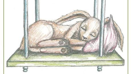Book Puts Kids Sleep Rabbit orig_00001524
