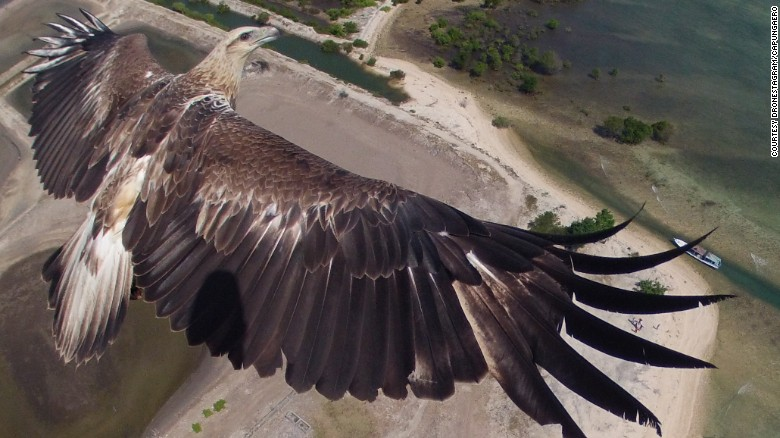 This spectacular image of an eagle from above was taken at Barat National Park, on the Indonesian island of Bali.