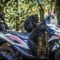 motorbike Comedy Wildlife Photography Awards