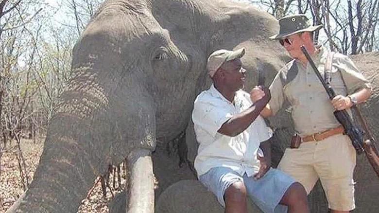 Elephants in Myanmar / Burma