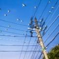 02 cnnphotos tokyo parrots RESTRICTED