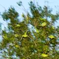 06 cnnphotos tokyo parrots RESTRICTED