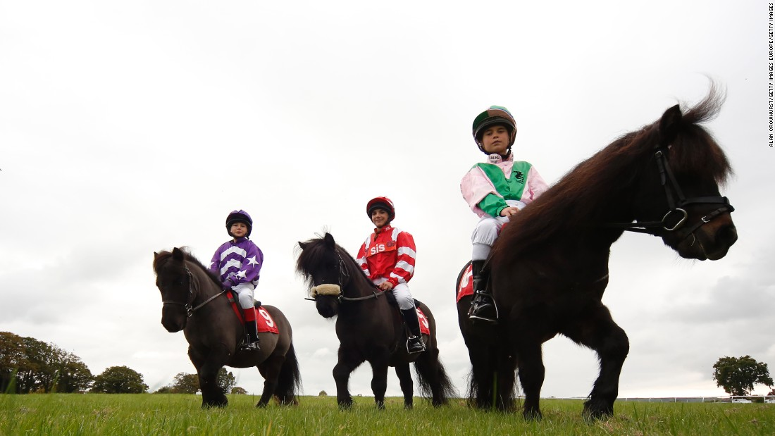 Located in East Sussex in southern England, Plumpton racecourse recently hosted the Shetland Pony Gold Cup.