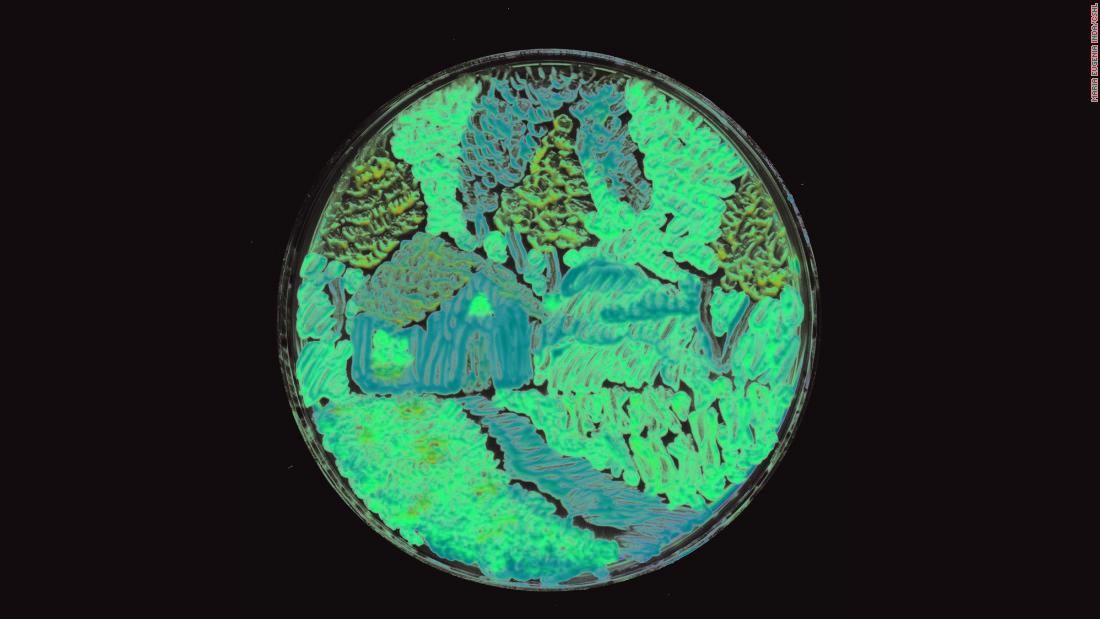 Bacteria Art