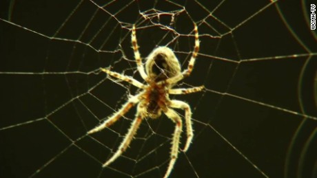 thousands of spiders bridge ohio pkg_00001901.jpg