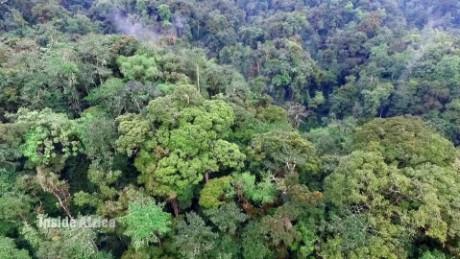 spc inside africa rwanda nyungwe a_00061301.jpg