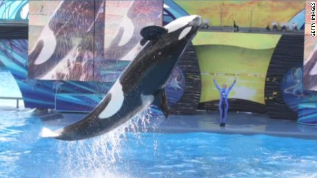 seaworld no more killer whale shows blackfish co-writer intv walker cnn today_00030707