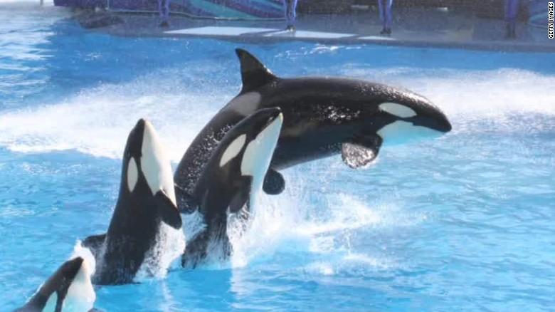 SeaWorld says 'So long, Shamu'