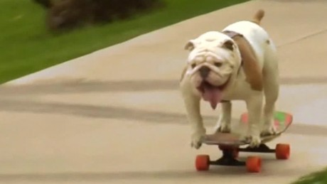 skateboarding.bulldog.breaks.record.zian.asher.pkg_00002628.jpg