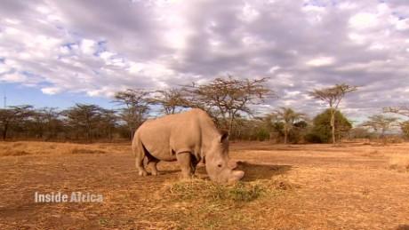 spc inside africa ol pejeta conservancy a_00002626.jpg