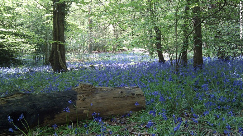 Whippendell Woods: So pretty not even Jar Jar Binks can spoil it.
