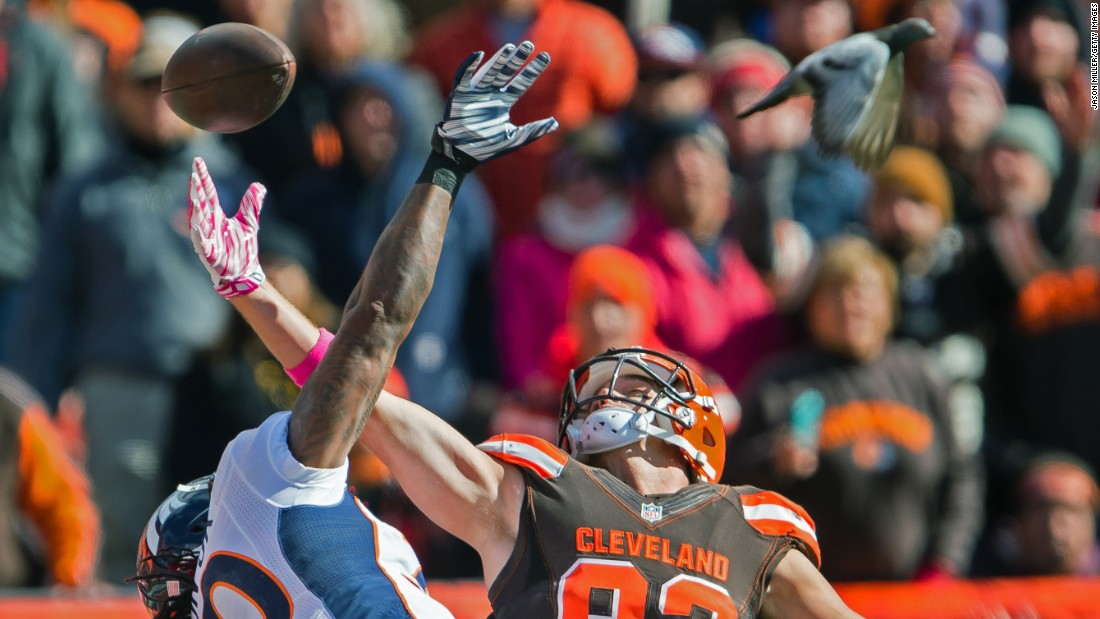A bird flies near Denver safety David Bruton, left, as he defends Cleveland's Gary Barnidge during an NFL game in Cleveland on Sunday, October 18.