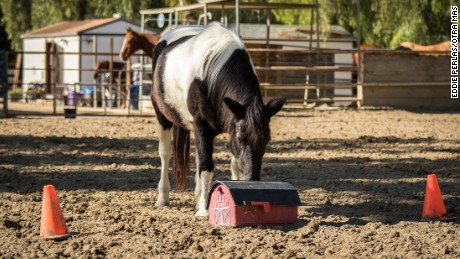 A horse nudges a prop at at the Ortega Center in San Juan Capistrano, California.