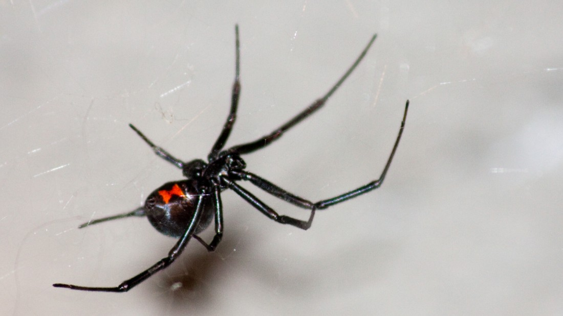 What This Itsy Bitsy Virus Took From A Spider
