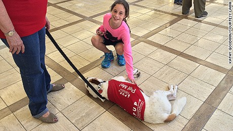Therapy dogs from Los Angeles Airport's PUP program (Pups Unstressing Passengers) giving fliers something to smile about at the airport.