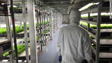Cleanliness is paramount in the facility, which uses no pesticides on the crops. Workers wear full-body suits and masks to maintain the environment.