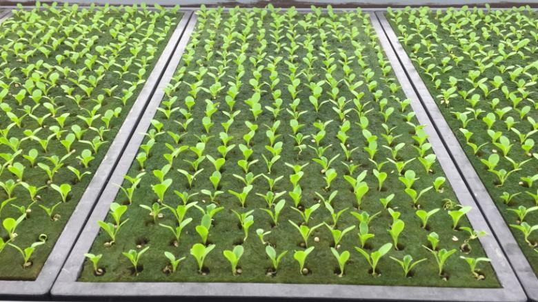 151201170156-kyoto-spread-vertical-farm-