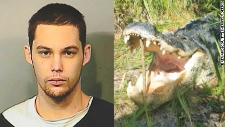 Alligator eats suspected burglar pkg_00004302.jpg