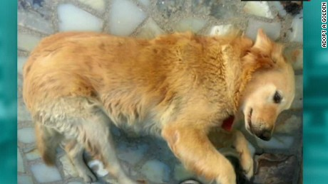 cnnee vo rec dogs rescue from sirya _00002126
