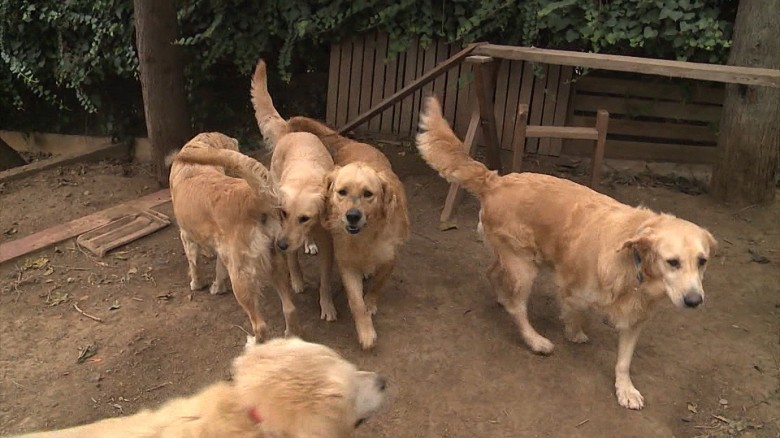 Finding homes for Turkey's abandoned canines