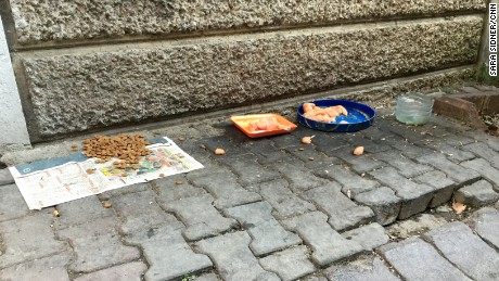 Residents in Istanbul leave food out on the sidewalks for the stray dogs.
