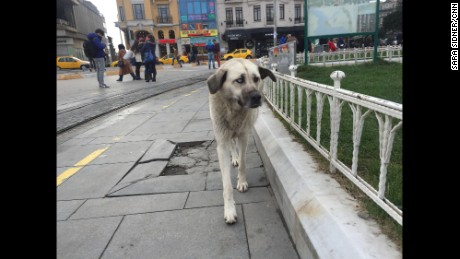 A stray dog walks in Taxim Square, Istanbul