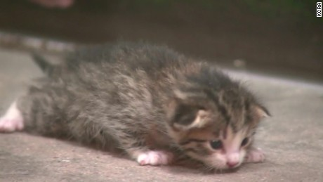 Kitten Survives Trash pkg_00005322