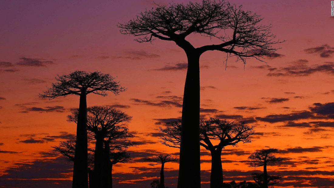 Undeveloped and raw, Madagascar has 8,000 species of animals found nowhere else on the planet. Aside from wildlife, highlights include Avenue of the Baobabs -- home to these stunning 1,000-year-old trees.