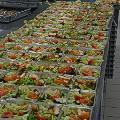 Emirates-salad