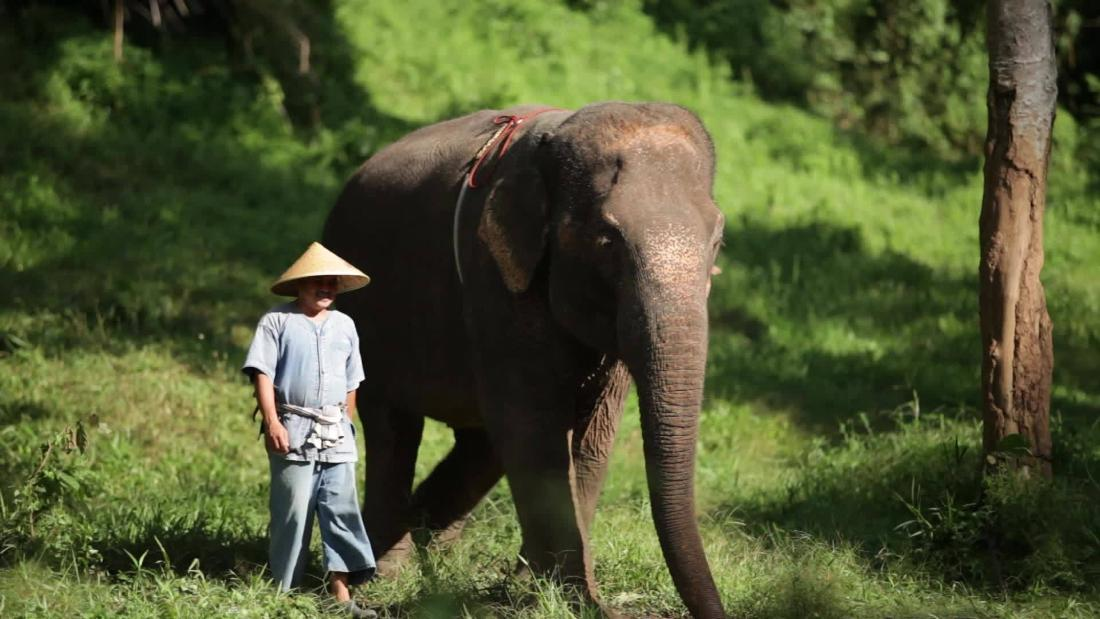 Play with elephants at this treetop paradise