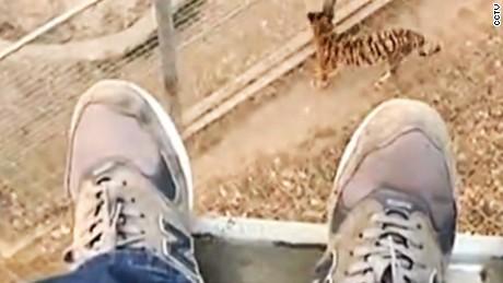 Man jump zoo tiger den orig vstan_00001015.jpg