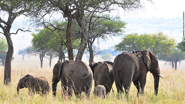 Kidepo National Park, in Northern Uganda, is rich with natural resources, thriving wildlife and growing tourist appeal.