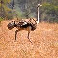 Uganda kidepo tourism wildlife safari