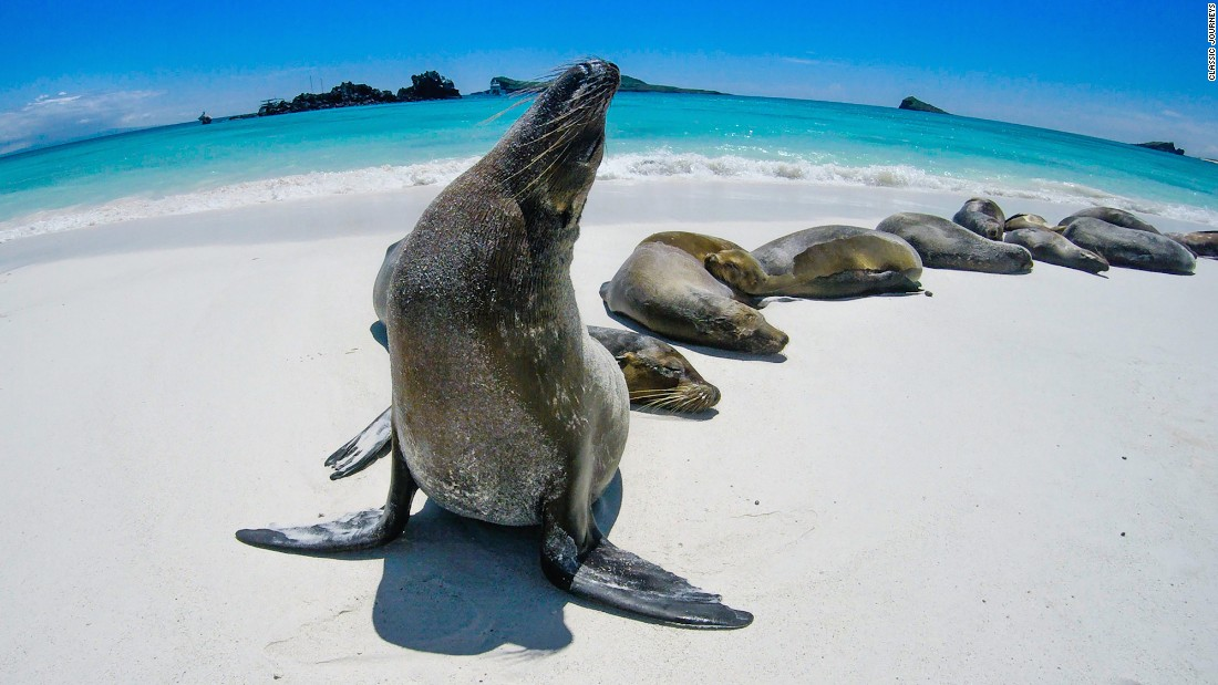 Classic Journeys' Galapagos Island Tour includes expeditions with expert naturalists as well as trekking, kayaking and snorkeling.