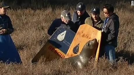 pregnant elephant seal highway california pkg_00000724