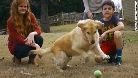 Turkey rescue dogs thriving in U.S.